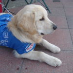 Guide dogs for the visually impaired in China not welcome