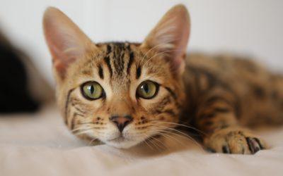 Professional animal communicator talks to pets