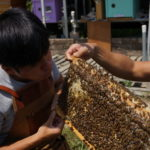 Hong Kong's Beekeepers